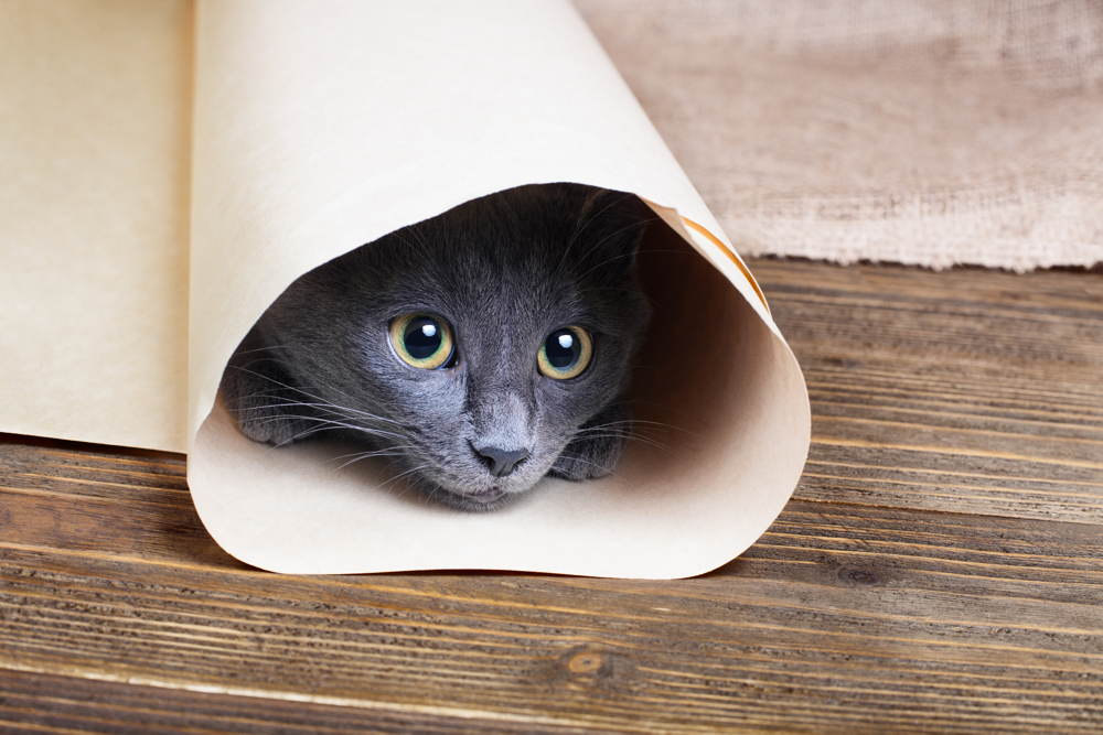 Cat hidden in a roll of paper
